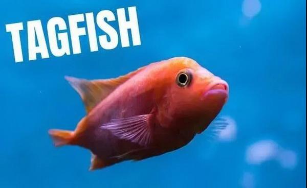"""你是一条紧凶的""""鱼""""吗?对照这7点看看"""